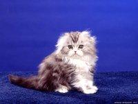 cats_070.jpg