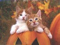cats_024.jpg